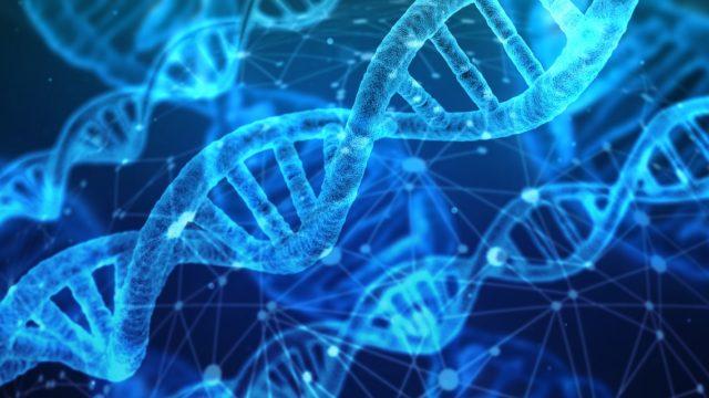 吃音者の遺伝子