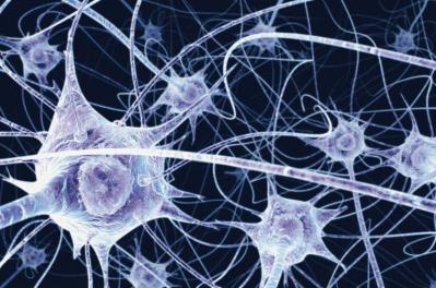 難発性吃音者の脳